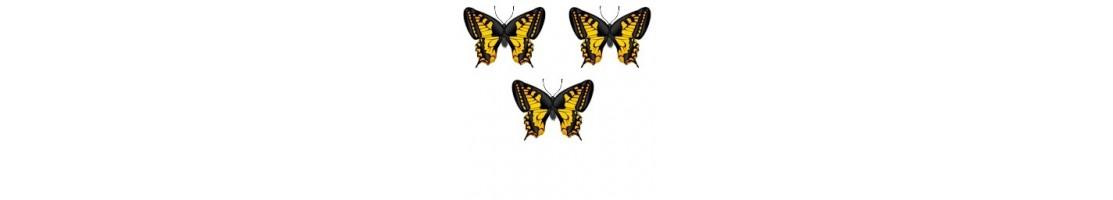 Petit - 3 Insectes